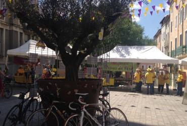 Vélo contre un arbre devant la mairie de Privas